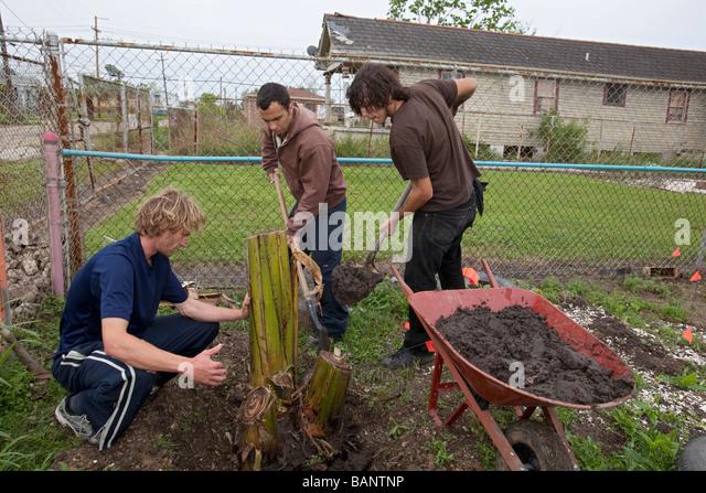 Planting Banana Stock Photos Planting Banana Stock Images Alamy