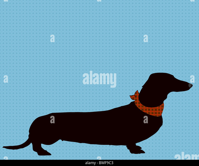 art, illustration, print, dachshund, dog, pet, animal, pet lover, dog lover, silhouette, pets, wall decor, - Stock Image