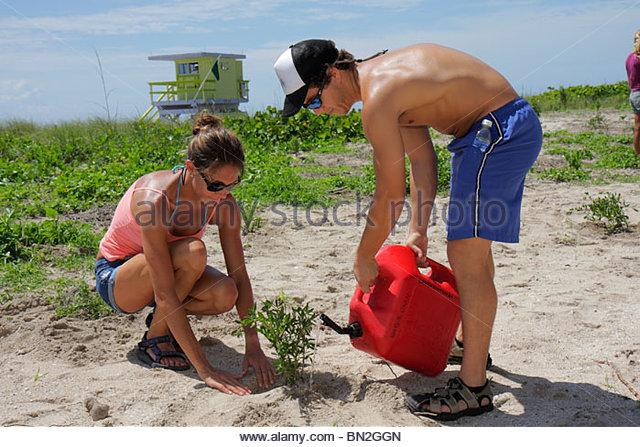 Miami Beach Florida Beach View Park Surfrider Foundation Coastal Dune Restoration planting volunteer watering man - Stock Image