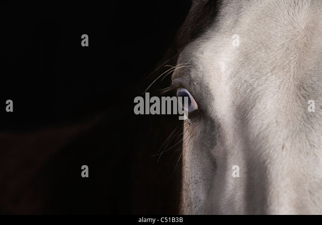detail of horse head - Stock Image