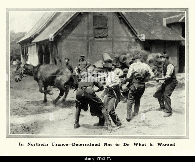 British soldiers shoeing a mule in Northern France during the first workd war. - Stock Image