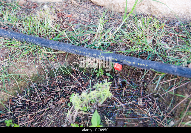 Drip Irrigation System Stock Photos Drip Irrigation System Stock Images Alamy