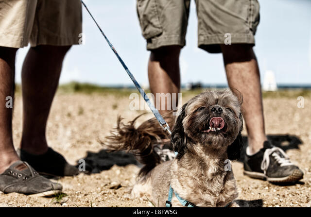 Two men walking dog, low section - Stock Image