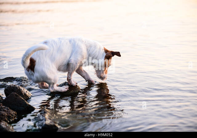 Dog fish stock photos dog fish stock images alamy for Water dogs fish
