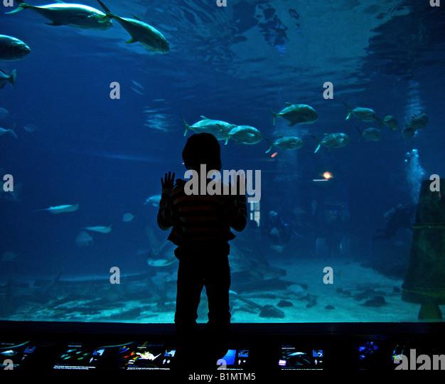 Aquarium Stock Photos Aquarium Stock Images Alamy