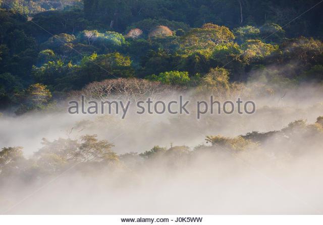 Misty morning in Soberania National Park, Republic of Panama. - Stock-Bilder