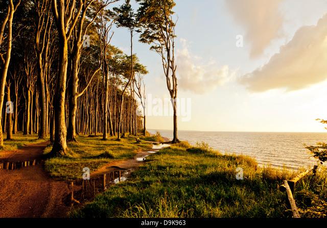 Baltic sea coast at Ostseebad Nienhagen with Haunted Woods at sunset - Stock Image