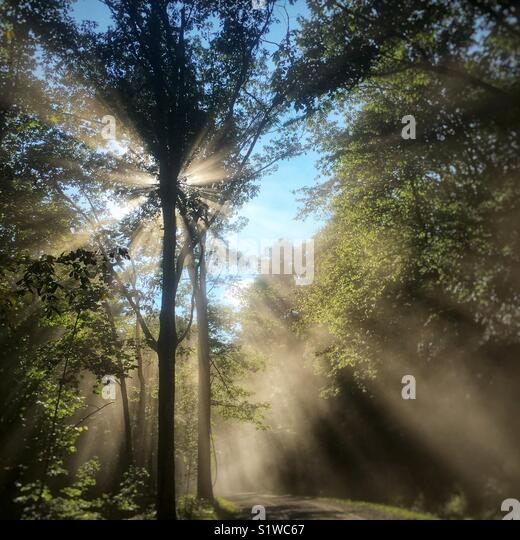 Sunlight thru the trees along a dusty road in West Virginia. - Stock Image