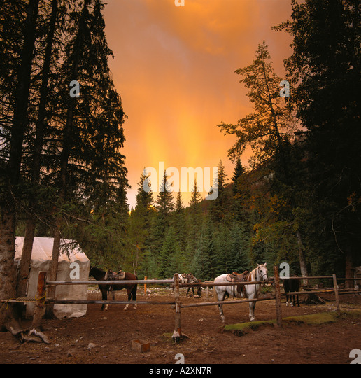 Canadian Rocky Mountains, sunrise at horse corral at wilderness base camp, Banff National Park,  Alberta, Canada - Stock Image