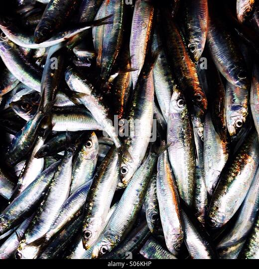 Fresh sardines close up - Stock Image