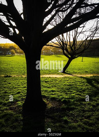 Trees on common looking down to suburban  houses - Stock-Bilder