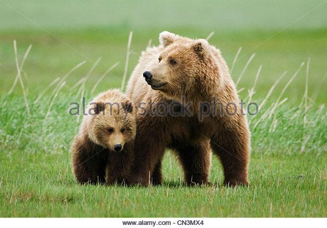 Brown bear mother and cub, Katmai National Park, Alaska - Stock-Bilder