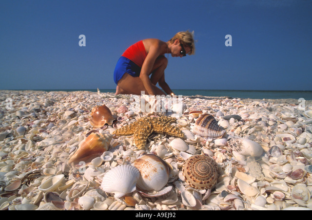 Florida Sanibel Island Woman searching for sea shells shells and starfish in foreground - Stock Image