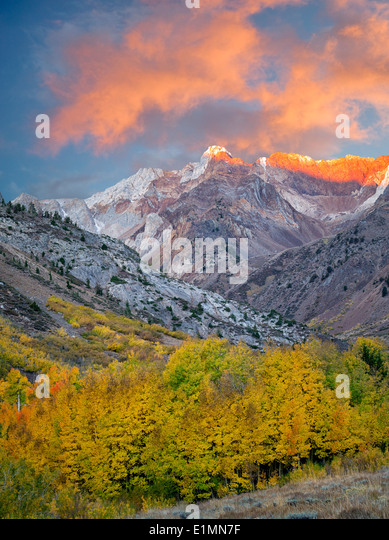 Mcgee Creek drainage with fall colored cottonwood and aspen trees. Eastern Sierra Nevada Mountains, California - Stock Image