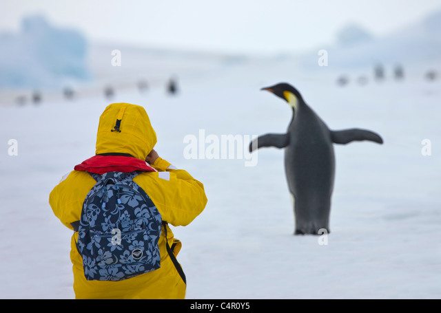 Tourist photographing Emperor Penguin on ice, Snow Hill Island, Antarctica - Stock-Bilder