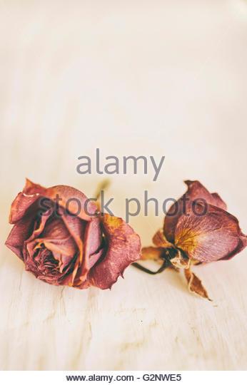 two dry red roses on white wood - Stock-Bilder