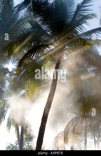 Morning shards of sunlight coming through palm trees in Southern India - Stock-Bilder