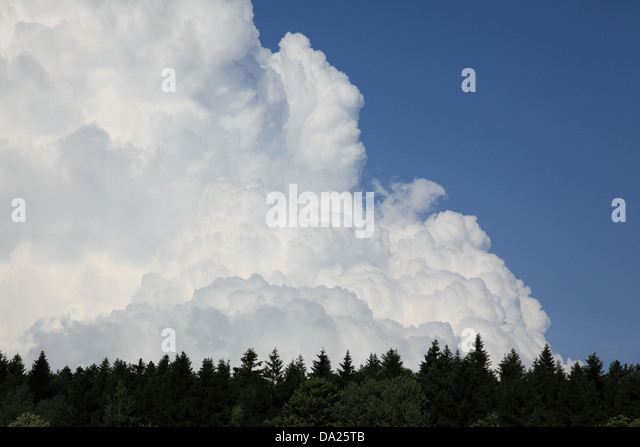 Dramatic storm cloud formation  gathering against a blue sky and above treetops. Photo by Willy Matheisl - Stock Image