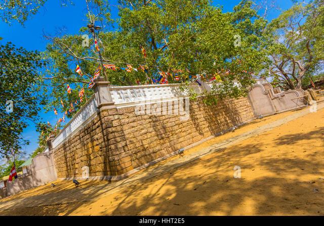 Southwest corner of Jaya Sri Maha Bodhi tree compound and sacred fig tree above at ancient Anuradhapura capitol - Stock Image