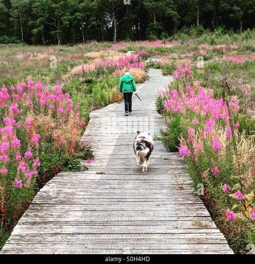 Boy and dog walking - Stock Image