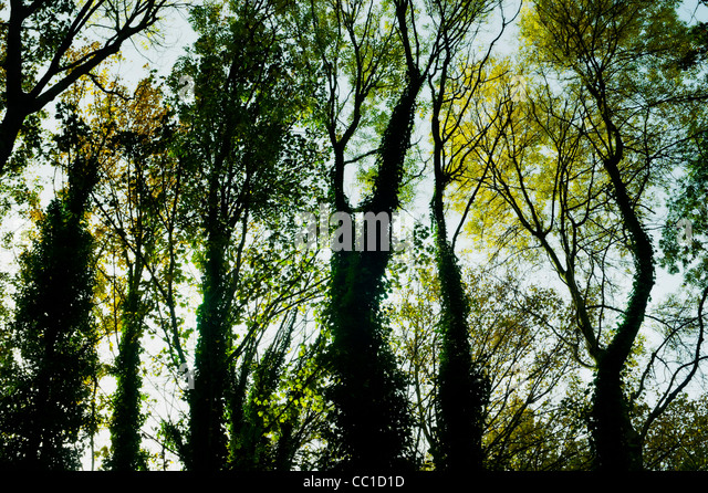 Autumnal  sun seen through the heavy canopy of trees on Park walk , a disused railway line come nature trail in - Stock Image
