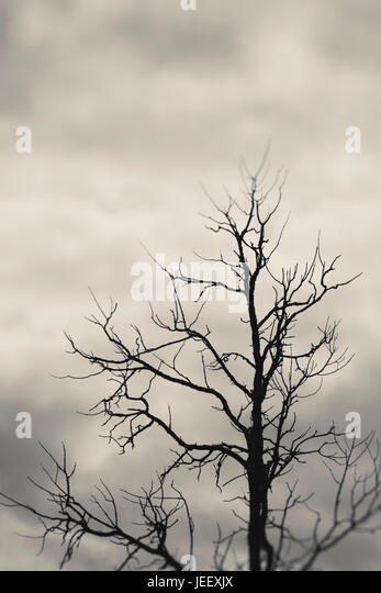 Dead tree silhouette with dark and ominous sky. Dramatic and mysterious nature scene. - Stock-Bilder
