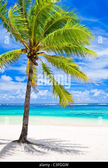 Single palm tree overlooking amazing blue lagoon - Stock-Bilder