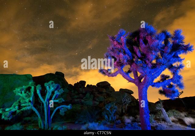 Colorful lights on Joshua Trees at night, Joshua Tree National Park, California, USA - Stock Image