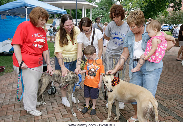 Indiana Chesterton Thomas Centennial Park Bark in the Park dog greyhound adoption pet animal leash woman women boy - Stock Image