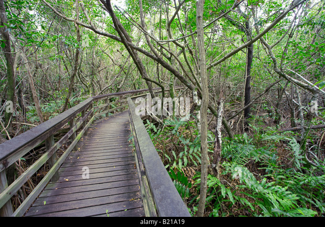 walkway through everglades national park forest in Florida, USA - Stock-Bilder
