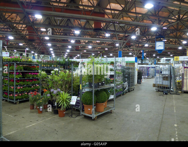 Plant sales area at New Covent Garden Market, London - Stock Image