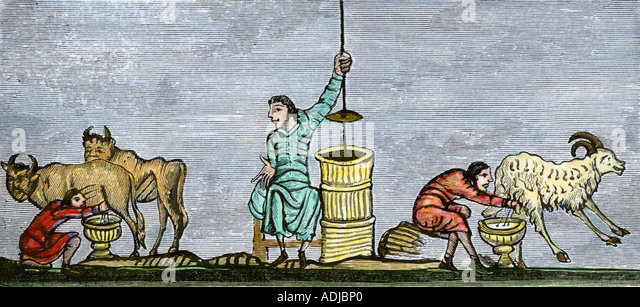 Milking cows and a goat and churning butter in the 12th century - Stock Image