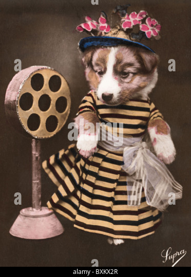 oddity, dog dressed as woman, with lady dress, hat and toy microphone, picture postcard, Netherlands, circa 1930, - Stock Image
