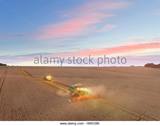 Aerial View Of Combine Harvester In Wheat Field At Dusk - Stock Image