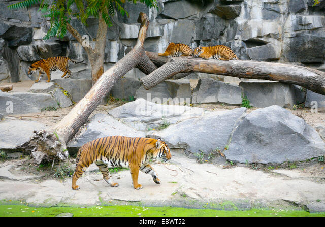 zoo enclosure stock photos zoo enclosure stock images alamy. Black Bedroom Furniture Sets. Home Design Ideas