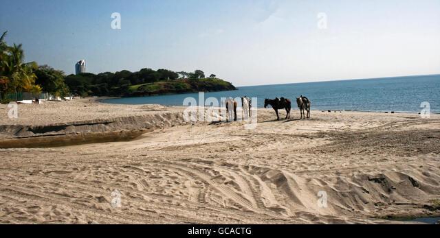 Saddled horses on a sandy beach in Panama. - Stock Image