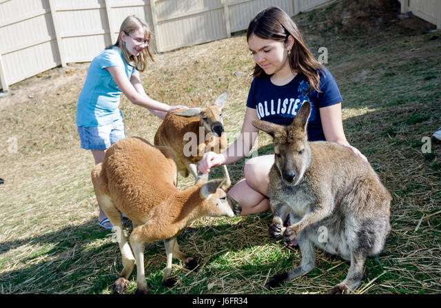 Tennessee Sevierville Rainforest AdventuresTropical Discovery Zoo kangaroo teen girls sisters petting - Stock Image