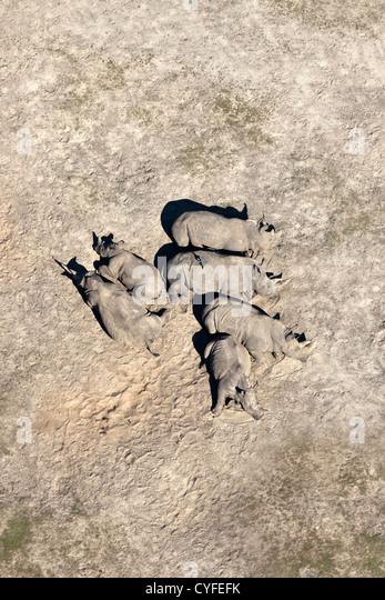 The Netherlands, Hilvarenbeek. Wildlife zoo called Safari park Beekse Bergen. Rhinoceroses resting. Aerial. - Stock-Bilder