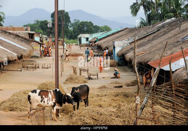 INDIA Odisha Orissa, Raygada, tribal village Kodesu, Dongria Kondh tribe / INDIEN Odisha Orissa, Raygada, Dorf Kodesu, - Stock-Bilder
