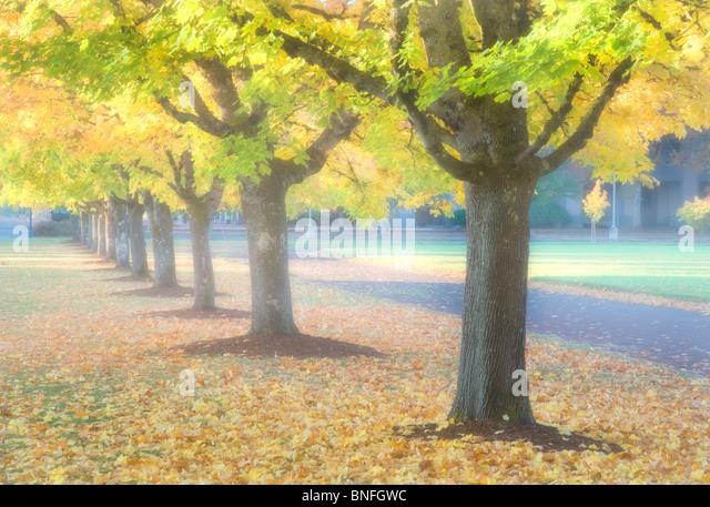 Fall colored trees on Oregon State University campus. - Stock Image