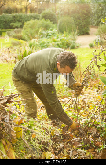Gardener Cutting Weeds - Stock Image