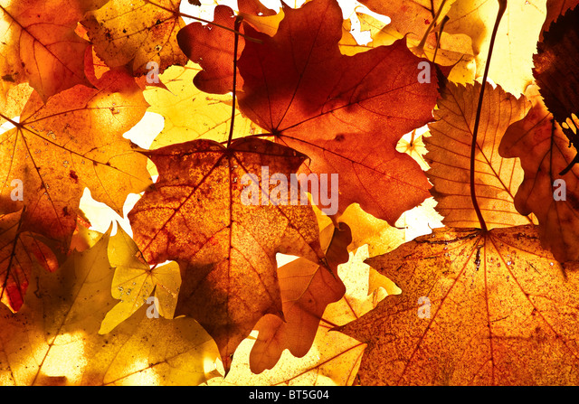 Autumn background from the fallen down leaves. - Stock-Bilder