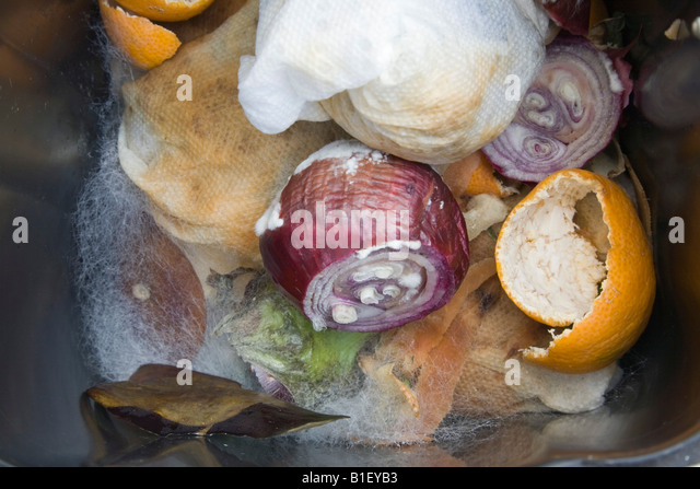 Mouldy vegetables in a waste bin with fungus growing on rotten decomposing leftover food. - Stock Image