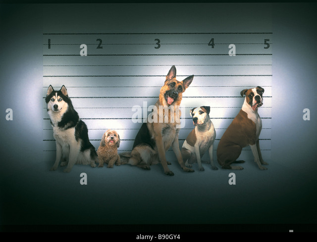 FL3053, KITCHIN/HURST; Criminal line-up  bad dogs - Stock-Bilder
