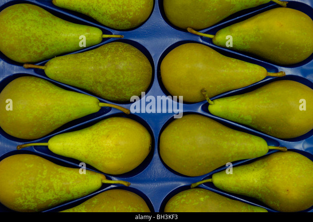 Highland Court Farm's Conference pears winners in the Class 14 at the National Fruit Show, Detling, Kent, 17th - Stock Image