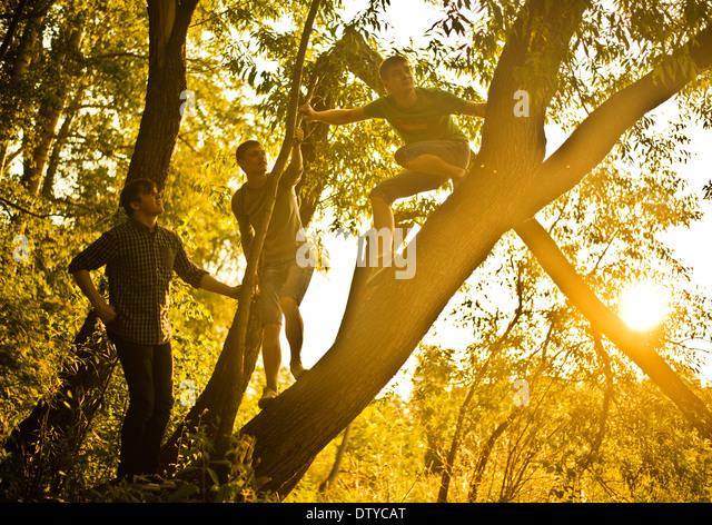 Caucasian men climbing tree in forest - Stock Image