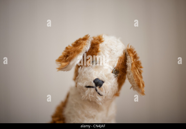 Soft toy dog - Stock Image