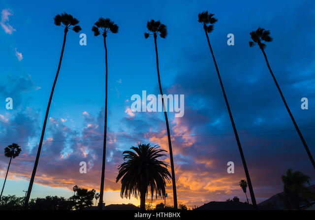 Tall palm trees in silhouette against a dramatic sunset sky, in Los Angeles, California. - Stock Image