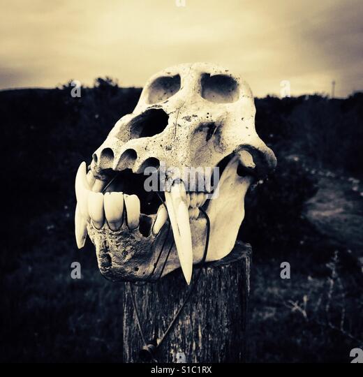 Animal skull - Stock-Bilder