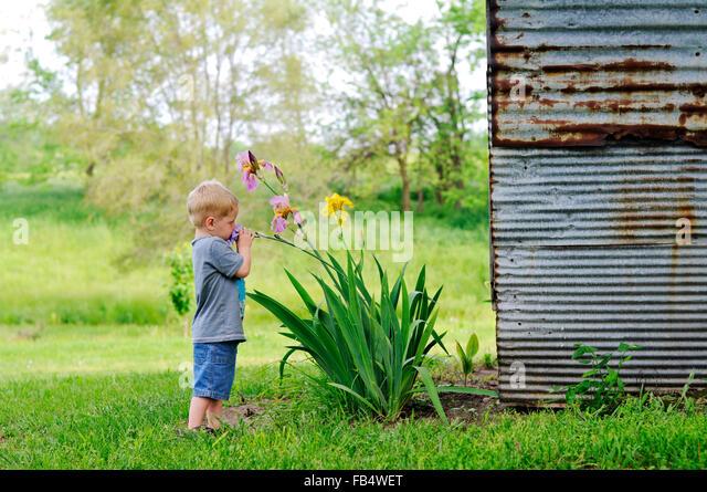boy smelling Iris flowers by barn - Stock Image